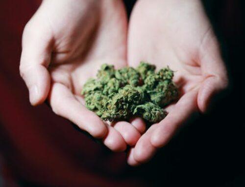 Top 7 Advantages of Cannabis